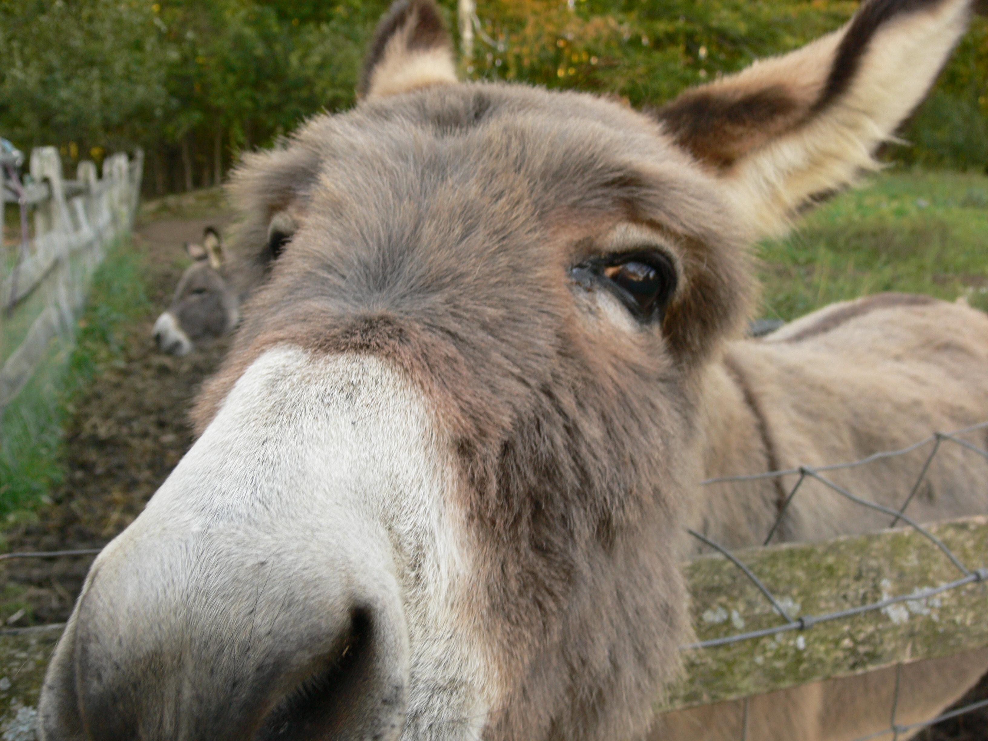 Ugly Donkey Related Ke...